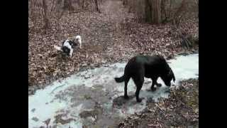 Dogs Hiking In The Woods