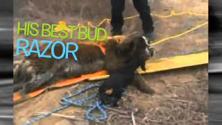 Dachshund Saves St. Bernard Bff Trapped In Mud