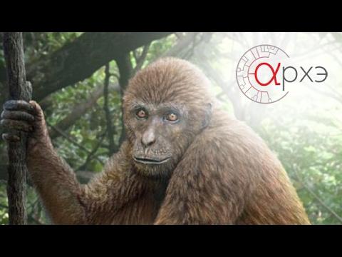 Станислав Дробышевский: Родня, заря и почти обезьяны