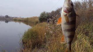 рыбалка на дунае видео