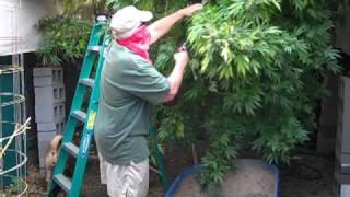 greenhouse harvest 2010