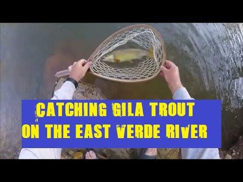 Gila Trout Fishing On The East Verde River