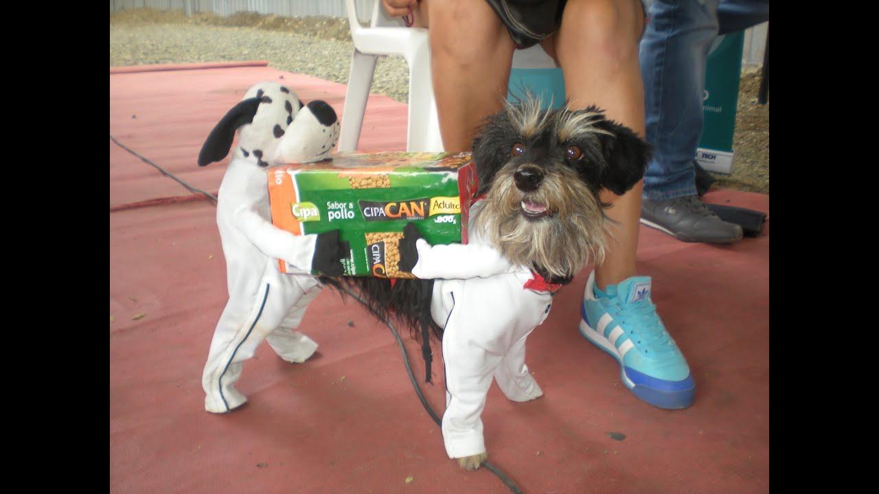 El mejor disfraz de perro del mundo youtube - Disfraces del mundo ...