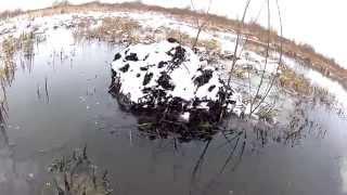 Охота на ондатру капканами КП-120
