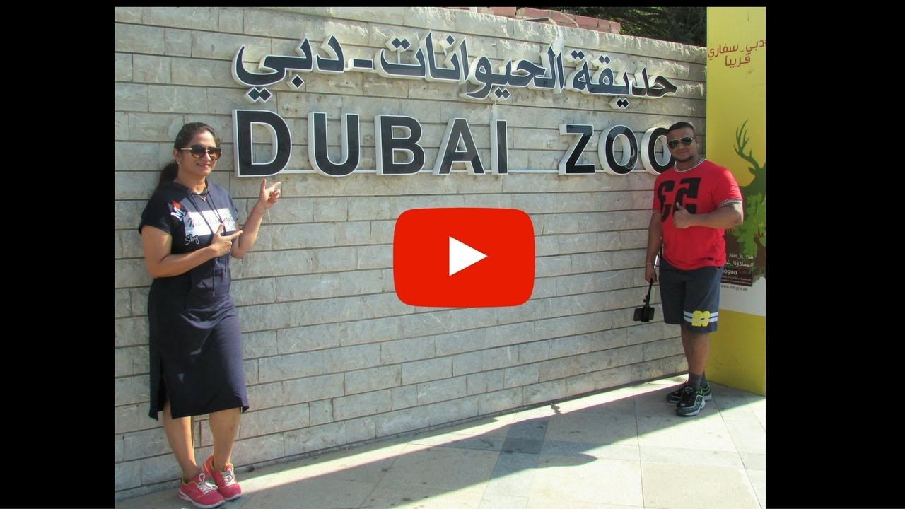 Dubai Zoo 2016 Youtube