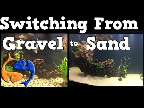 Switching Your Aquarium Substrate From Gravel To Sand 125