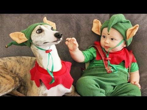 Whippet Dog and Baby being good friends | Dog loves Baby Videos
