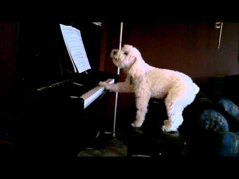 Tucker piano #2- Caught on camera