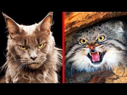 Кошка в доме: породы, которые терпеть не могут россияне