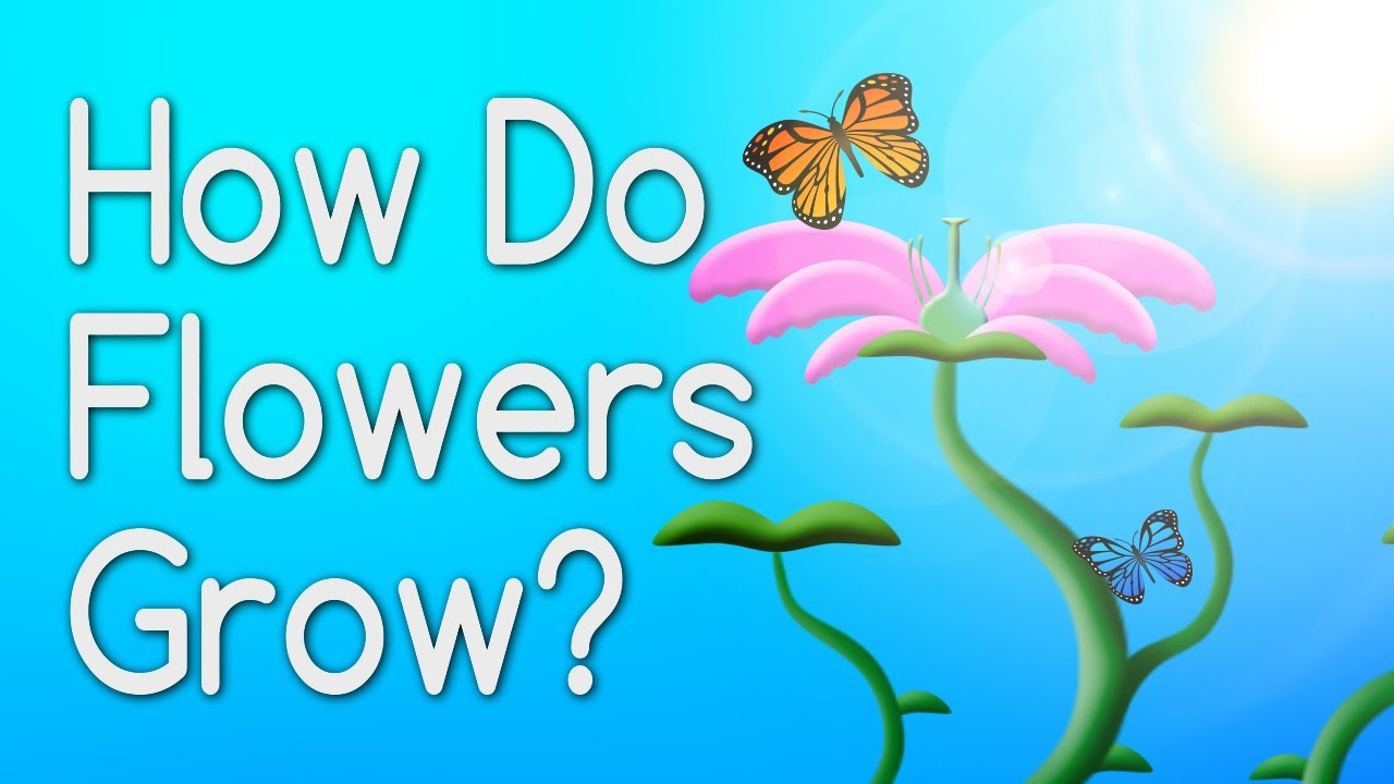 how do flowers grow from seeds? educational video for kids, Natural flower