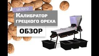 Как сортируют орех на производстве? Обзор калибратора грецкого ореха.