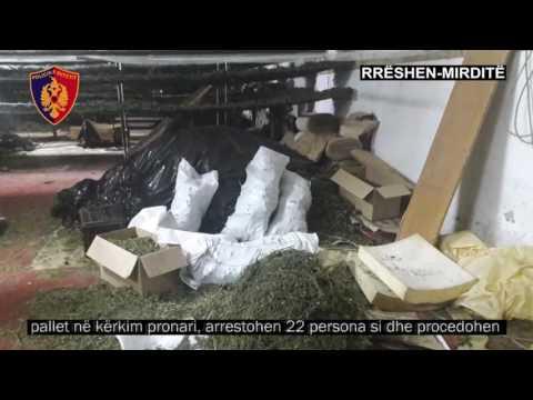 """Droga në Rrëshen, """"Befasia"""" çoi në pranga 22 persona - Top Channel Albania - News - Lajme"""