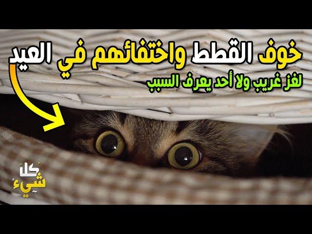 أين تذهب القطط يوم العيد وتختفي تماما؟! الإجابة مذهلة بحق