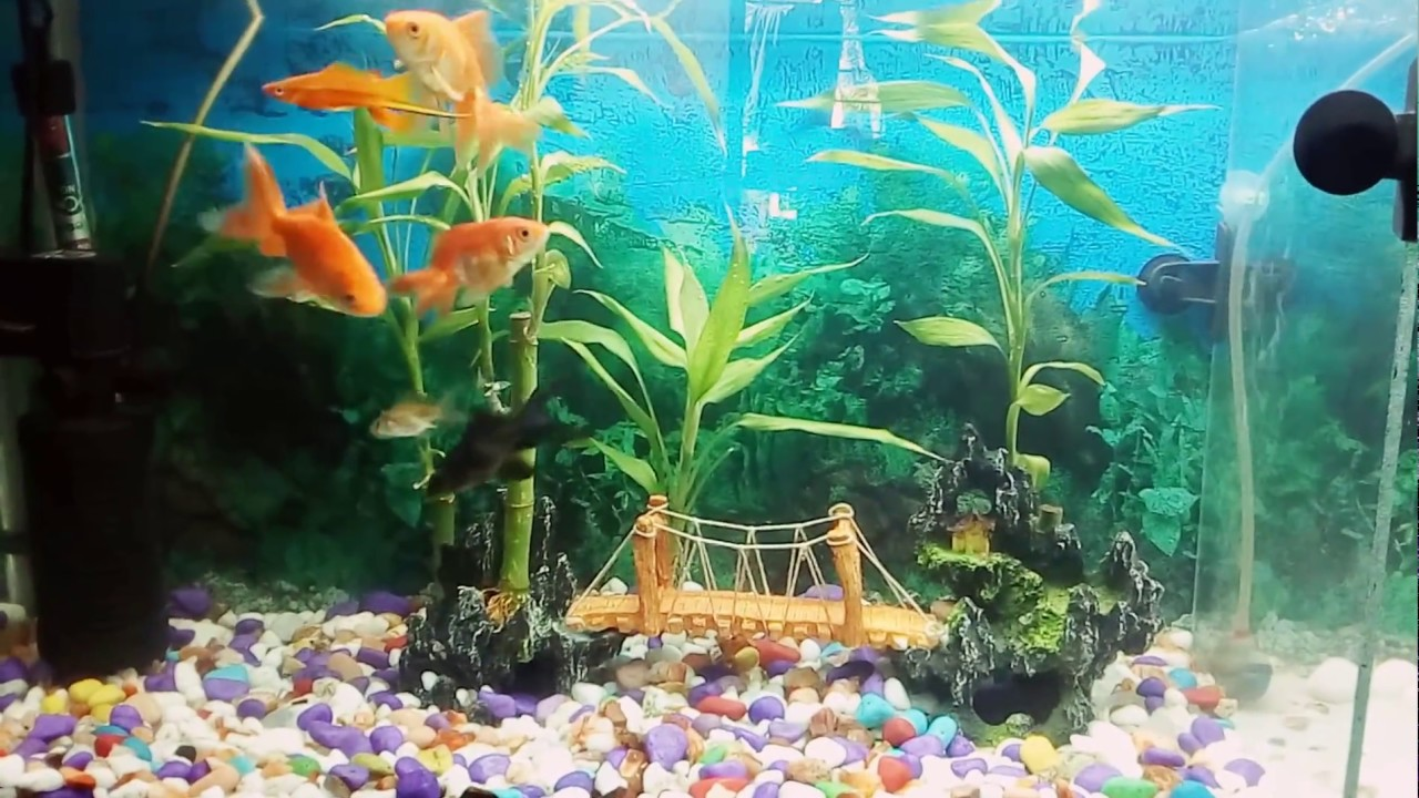 My Fish Tank Setup With Lucky Bamboo Plant Youtube