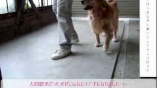 犬のしつけ本がパソコンで今すぐ読める♪ これは、しつけ後の動画です。 ...
