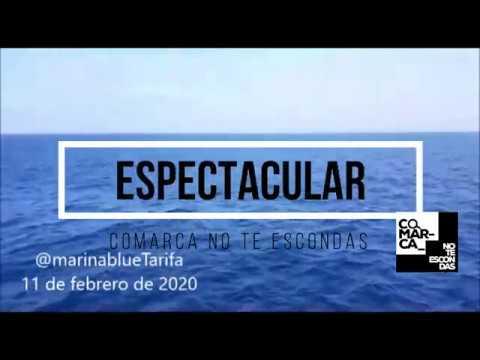 Avistamientos El Estrecho febrero 2020