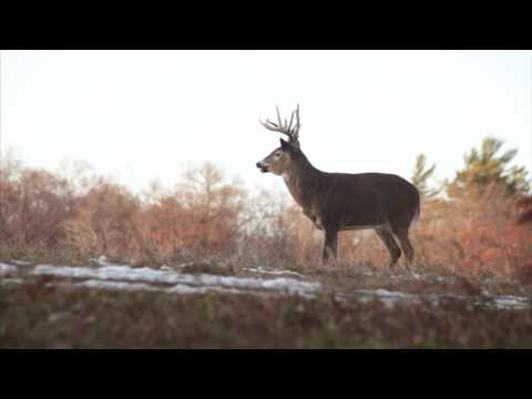 2017 Whitetail Rut: Three Things You Need to Know