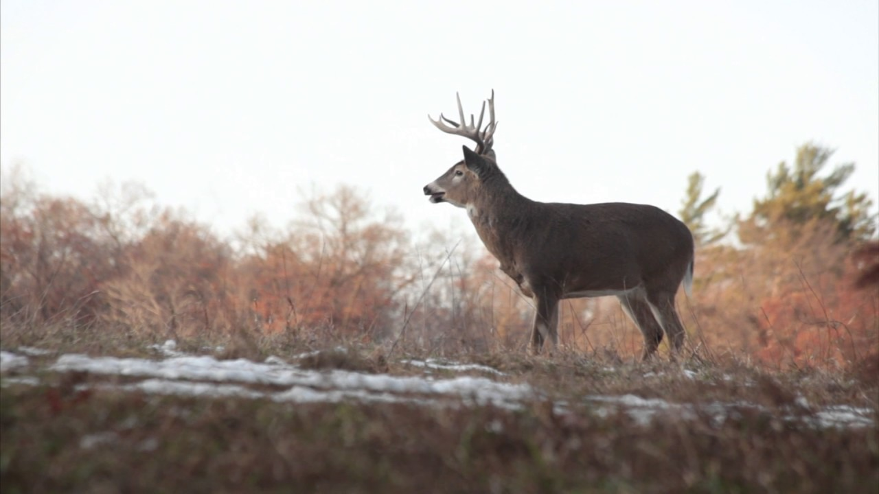 Whitetail Rut: Three Things You Need to Know on deer hunting heat map, georgia regions map, alabama population density map, alabama deer density map, georgia habitat map, deer moon phase chart 2014,