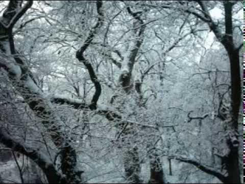 Woods in Winter.mpg