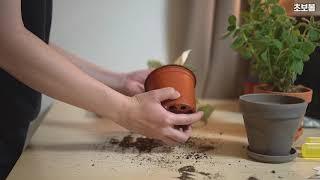 [대리취미#034] 이제 식물도 구독하자! 달드리미