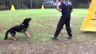 German Shepherd Stud Dog Eval- Beowulf Meets Chris Meverden