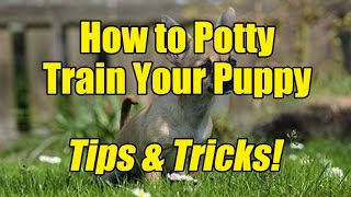 How to Potty Train a Puppy!