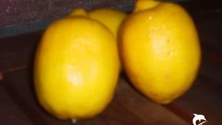 """""""Warum die Zitronen sauer wurden"""" gelesen von Karsten Eckert"""