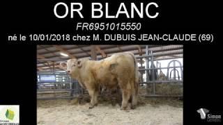 OR BLANC 5550 par Simon Genetic thumbnail