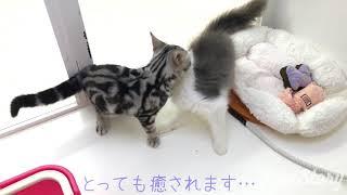 マルワンHPはこちら→http://maruone.com.