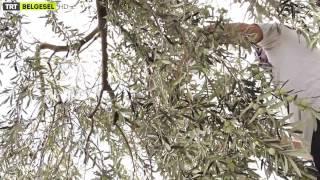 Bi Çiftlik - 11. Bölüm Ayvalık - TRT Belgesel