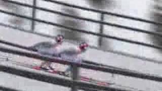 SKI JUMPING PAIR ~ROAD TO TORINO~ 2006