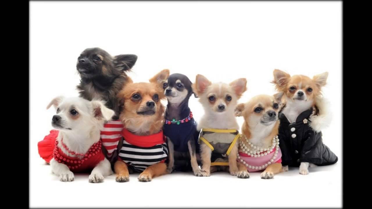 вязаная одежда для маленьких собак своими руками - YouTube