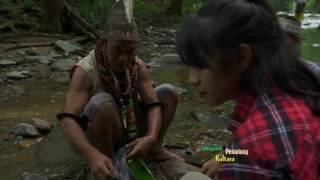 vuclip JEJAK PETUALANG - POHON RAKSASA KALIMANTAN DI MATA DUNIA (20/3/17) 3-2