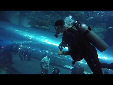Scuba Diving at Dubai Aquarium & Underwater Zoo