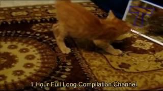 До слез смешные видео про кошек 8)
