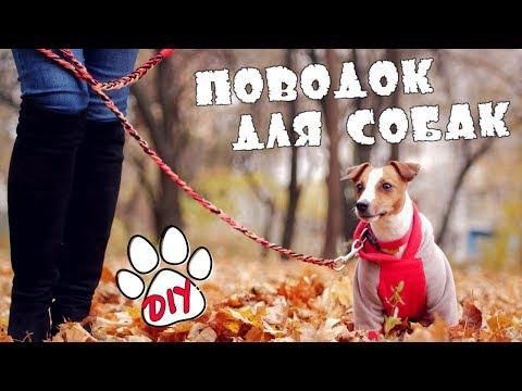Видео как сделать поводок для собаки