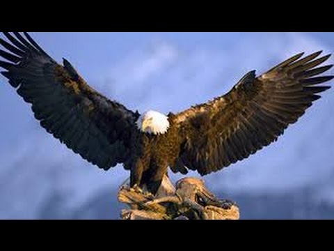 eagle.mp3
