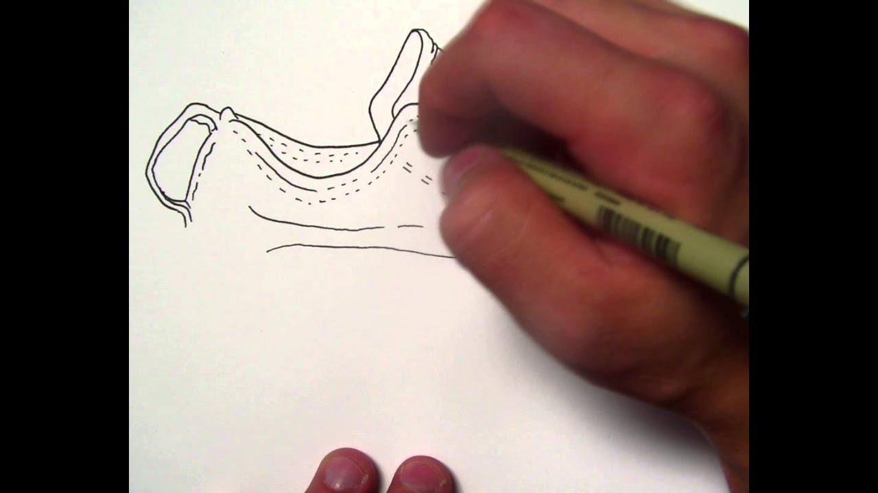 Contour Line Drawing Of A Shoe : Line contour shoe youtube