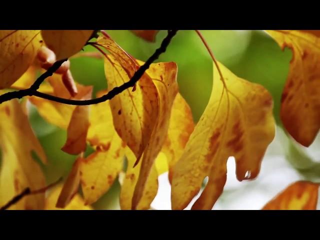 Смотреть видео Derek Nigell - Autumn Swell