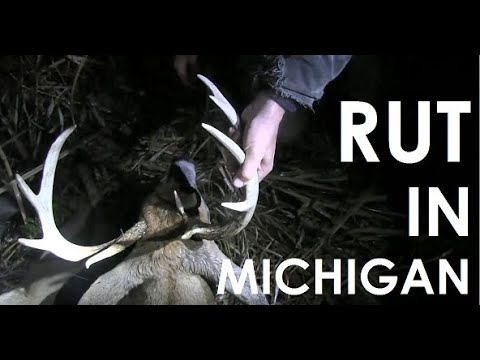 Michigan Rut Bow Hunting - 10 Point Buck