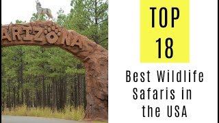 Best Wildlife Safaris in the USA. TOP 18