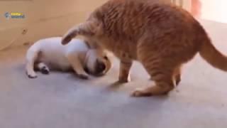 Śmieszne filmiki  Koty HD 2017