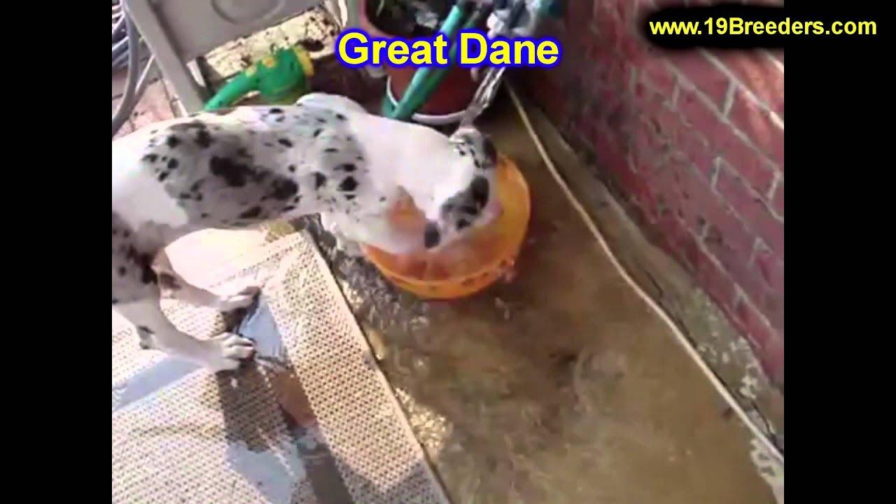 Dog Kennel For Sale Lincoln Ne