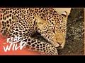 20 Stärkste Urzeit-Tiere Aller Zeiten - YouTube