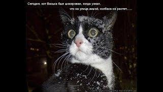 Коты и зима, смешные моменты