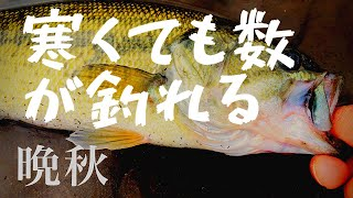【バス釣り】11月の小貝川に釣り行ってきた
