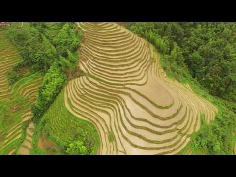 Rice terraces of Longji (Guilin)