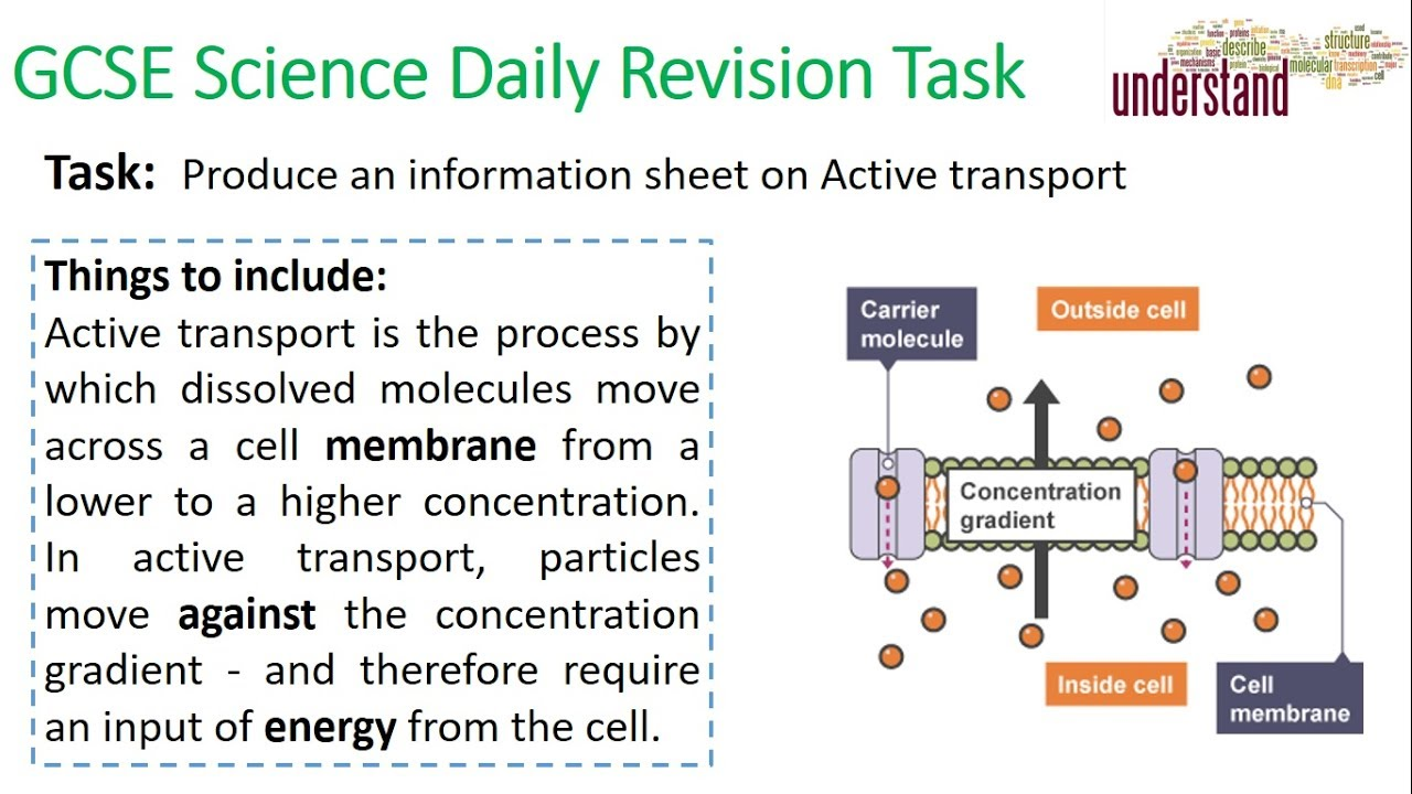 The Revision Technique No One Tells You: How to EASILY ...