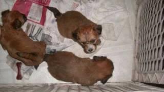 puppies 4 u tube