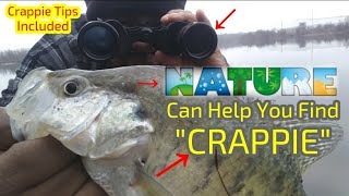 Nature Can Help You Find CRAPPIE! WINTER CRAPPIE Crappie Town USA Baby